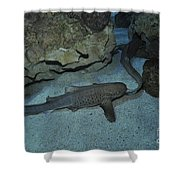 Leopard Shark Courting, Blue Zoo Shower Curtain