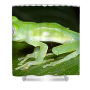 Limon Giant Glass Frog Shower Curtain