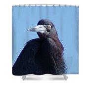 Little Blue Heron II Shower Curtain