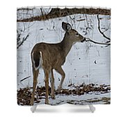 Little White Tail On The Move Shower Curtain