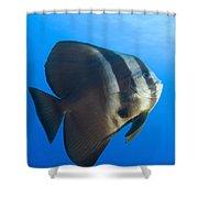 Longfin Spadefish, Papua New Guinea Shower Curtain