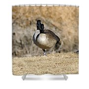 Look One Leg Shower Curtain