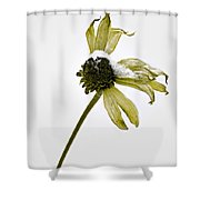 Love Me Not Shower Curtain