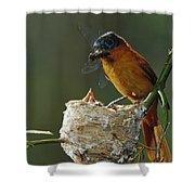 Madagascar Paradise Flycatcher Shower Curtain