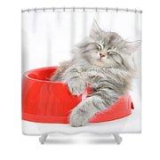 Maine Coon Kitten Shower Curtain