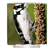 Male Downy Woodpecker  Shower Curtain