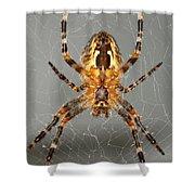 Marbled Orb Weaver Spider Shower Curtain