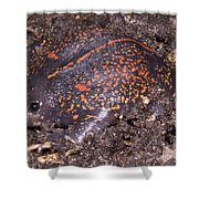 Mexican Burrowing Toad Shower Curtain
