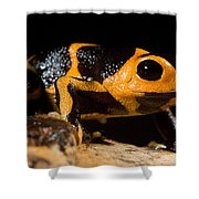 Mimic Poison Frog Shower Curtain