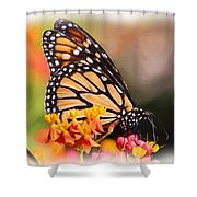 Monarch And Milkweed Shower Curtain