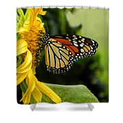 Monarch And The Sunflower Shower Curtain