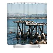 Monterey City Center Shower Curtain