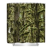 Moss Covered Trees, Hoh Rainforest Shower Curtain