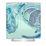 Mouse Embryo Shower Curtain