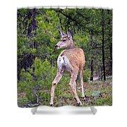 Mule Deer Doe Shower Curtain
