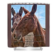 Mule Wink Shower Curtain