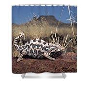 Namaqua Chameleon Chamaeleo Namaquensis Shower Curtain
