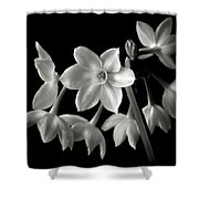 Narcissus In Black And White Shower Curtain