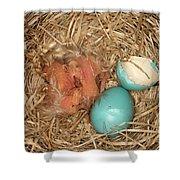 Newborn Robin Nestlings Shower Curtain