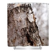 November Birch Shower Curtain