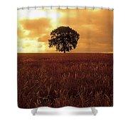 Oak Tree In A Barley Field, Ireland Shower Curtain