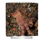 Ocellate Octopus With Two Blue Spots Shower Curtain