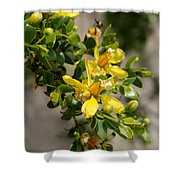 Ocotillo Wild Flower Shower Curtain