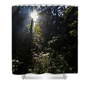 Old Forests At Evo Shower Curtain