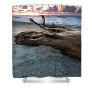 Old Tree Trunk On A Beach  Shower Curtain