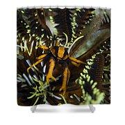 Orange And Brown Elegant Squat Lobster Shower Curtain