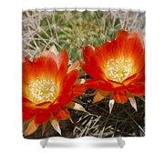 Orange Cactus Flowers Shower Curtain