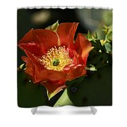 Orange Prickly Pear Blossom  Shower Curtain