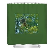 Orb Spider      Summer           Indiana Shower Curtain
