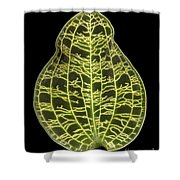 Orchid Leaf Shower Curtain