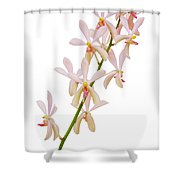 Orchid Panicle Shower Curtain