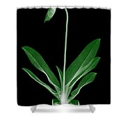 Orchid Plant X-ray Shower Curtain