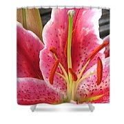 Oriental Lily Named La Mancha Shower Curtain