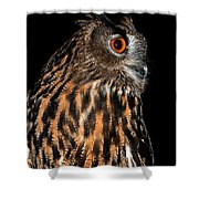 Side Portrait Of An Eagle Owl Shower Curtain