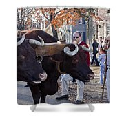 Oxen And Handler Shower Curtain
