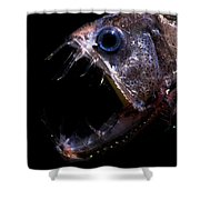 Pacific Viperfish Shower Curtain