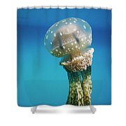 Papuan Jellyfish Mastigias Papua, Palau Shower Curtain