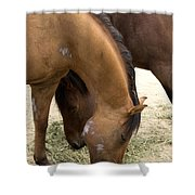 Parallel Ponies Shower Curtain