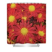 Patterned Petels Shower Curtain