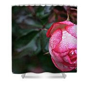 Peppermint Rose Shower Curtain
