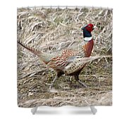 Pheasant Walking Shower Curtain