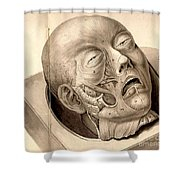 Physiognomical Illustration Of Human Shower Curtain