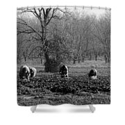 Pickers Shower Curtain