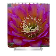 Pink And Orange Cactus Flower Shower Curtain