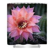 Pink Echinopsis Shower Curtain