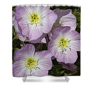 Pink Evening Primrose Wildflowers Shower Curtain